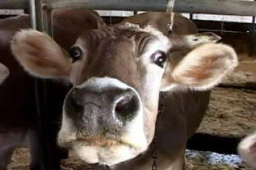 Beauty Things / остеодистрофия коров